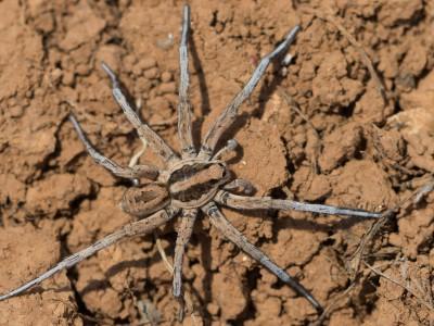 Undefinierte Spinne – Bild 2