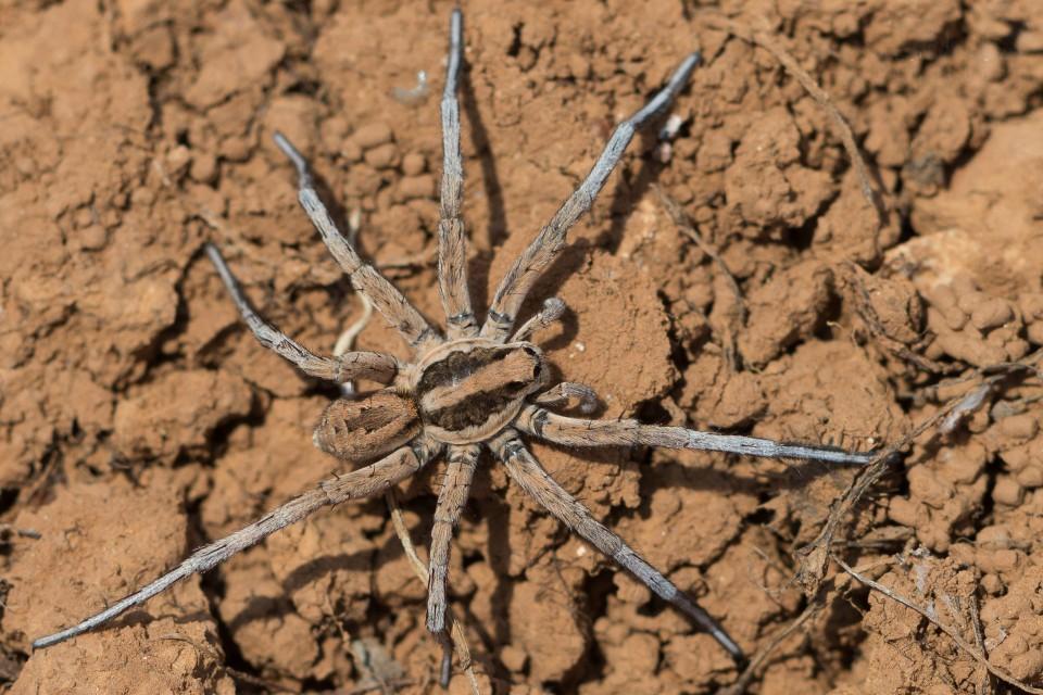Undefinierte Spinne  - Bild 2