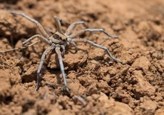 Undefinierte Spinne – 1