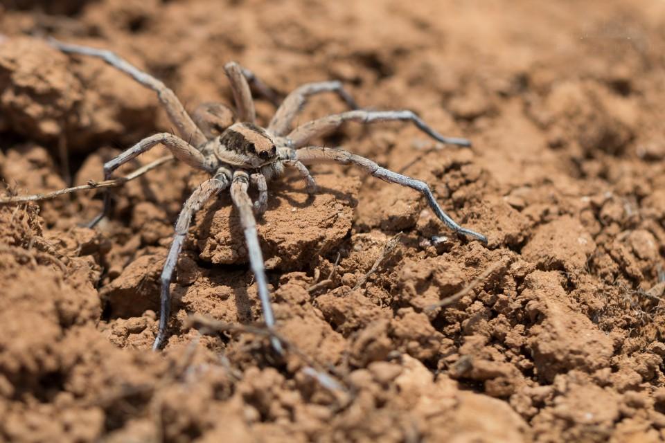 Spinne auf Lehmboden