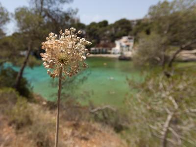 Bucht von Cala Santanyi