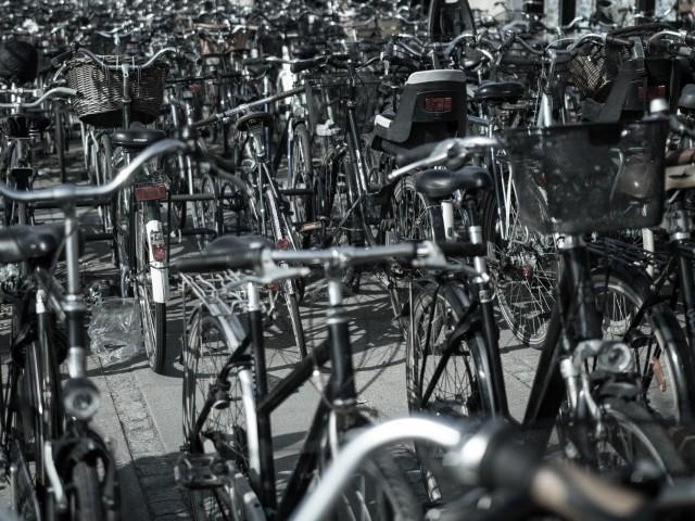 Fahrrad Dickicht