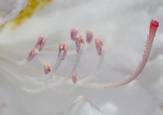 Blüten Stempel