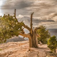 Grand Canyon – South Rim #2