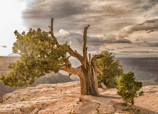 Grand Canyon – South Rim #2